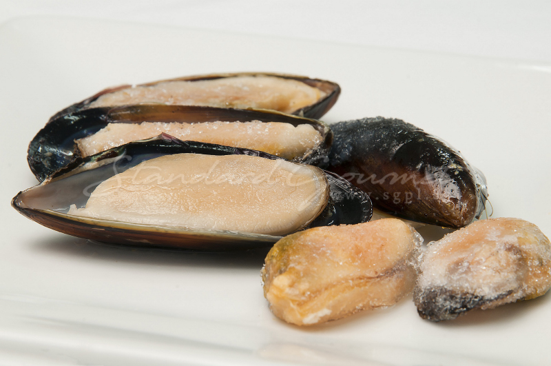 Black Mussel China